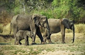 elephants-2010-097-copy