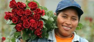 Roses from Ecuador